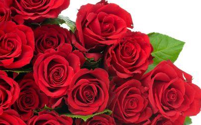 fonds-ecran-Rose-fleur-14.jpg
