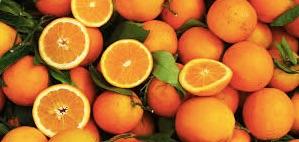 oranges copy